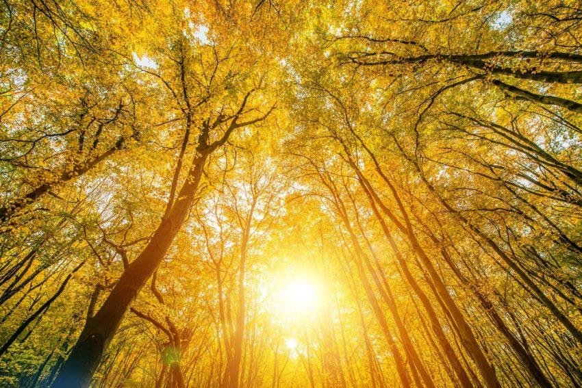 Er is geen muur buiten mij. Elke muur muurt in mij. Er is geen boom buiten mij. Elke boom boomt in mij. Er is geen kind buiten mij. Ieder kind speelt in mij. Er is geen bloem buiten mij. Iedere bloem bloeit en verwelkt in mij. Er is geen vijand buiten mij. Alle vijandigheid vecht…